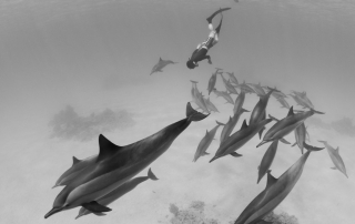 Go Freediving with wild spinner dolphins in Egypt