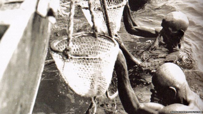 Bahrain pearl divers putting oysters into nets