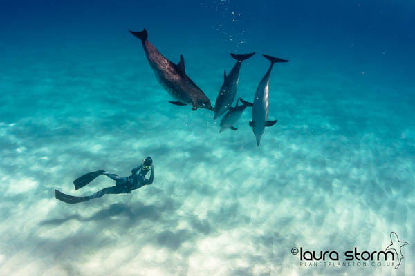 Mark Harris photographing dolphins underwater, taken from his book Glass and Water, photo by Laura Storm review at Go Freediving