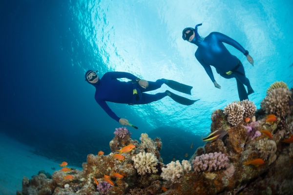 Beginners Guide to Freediving - safety for freediving - Two freedivers swimming over vivid coral reef in the Red Sea. Egypt