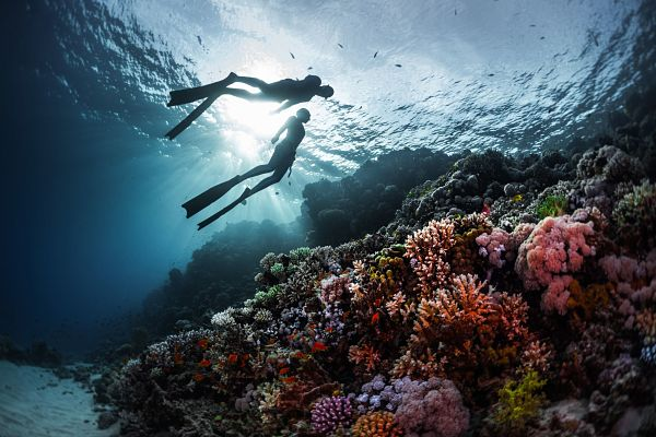 Beginners guide to freediving - How do you 'go pro' in Freediving - Two freedivers swimming underwater over vivid coral reef. Red Sea, Egypt