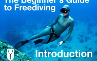 Beginners guide to freediving Introduction