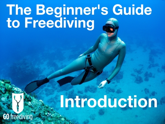 The Beginner's Guide To Freediving - a comprehensive online