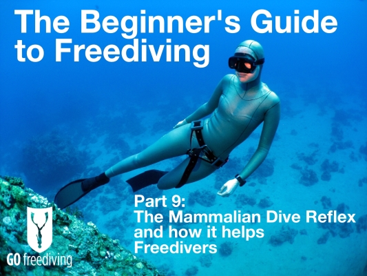 Beginners guide to freediving The Mammilian Dive Reflex and how it helps Freedivers