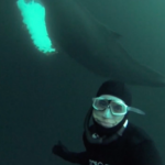 David Mellor selfie with humpback whales