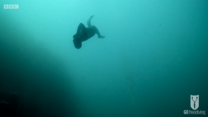 BBC Britain's Secret Seas, the power of the East, Emma Farrell freediving and descending down a line in the Farne Islands