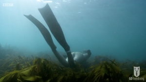 BBC Britain's Secret Seas, the power of the East, Emma Farrell freediving over kelp in the Farne Islands 2