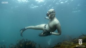 BBC Britain's Secret Seas, the power of the East, Emma Farrell freediving over kelp in the Farne Islands
