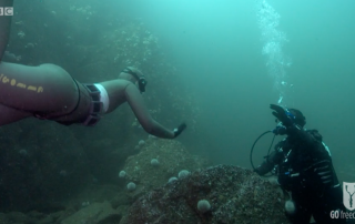 BBC Britain's Secret Seas, the power of the East, Emma Farrell freediving with Paul Rose on Scuba in the Farne Islands 4