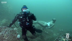 BBC Britain's Secret Seas, the power of the East, Emma Farrell freediving with Paul Rose on Scuba in the Farne Islands 6