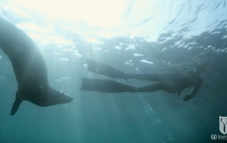 BBC Britain's Secret Seas, the power of the East, Emma Farrell freediving with seals in the Farne Islands 1