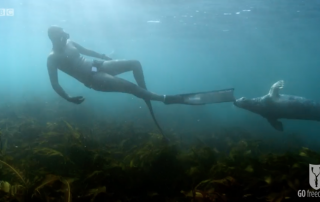 BBC Britain's Secret Seas, the power of the East, Emma Farrell freediving with seals in the Farne Islands 3