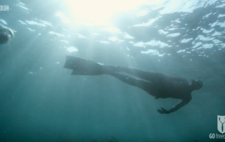 BBC Britain's Secret Seas, the power of the East, Emma Farrell freediving with seals in the Farne Islands