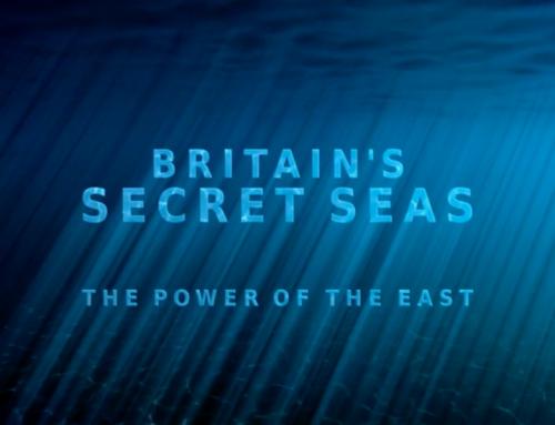 Freediving on Britain's Secret Seas