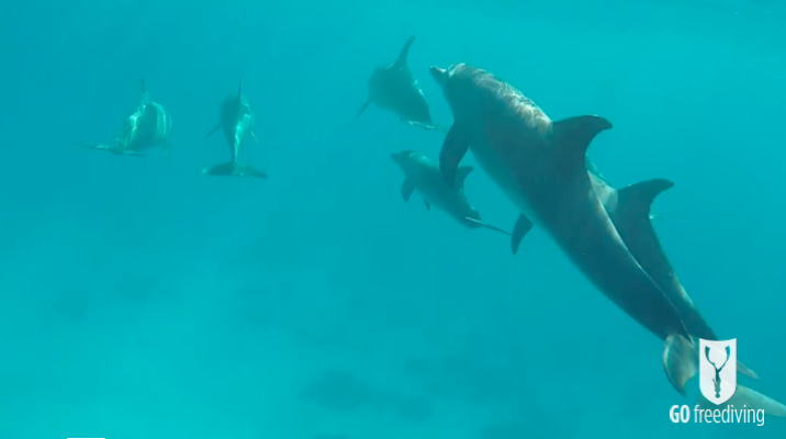 Freediving holiday in the red sea with dolphins