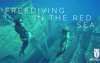 Freediving in the red sea title image