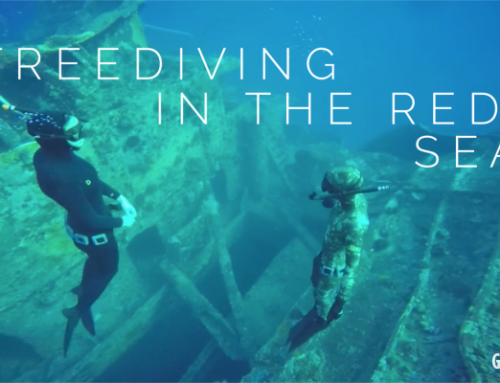 Freediving in the Red Sea – Four Films