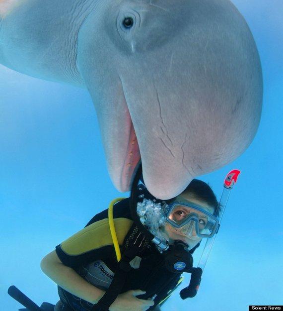 Go Freediving - underwater photobomb- Beluga Whale photo credit solent news