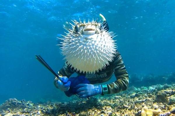 Go Freediving - underwater photobomb- puffer fish