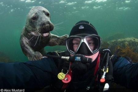 Go Freediving - underwater photobomb- seal - photo credit Alex Mustard