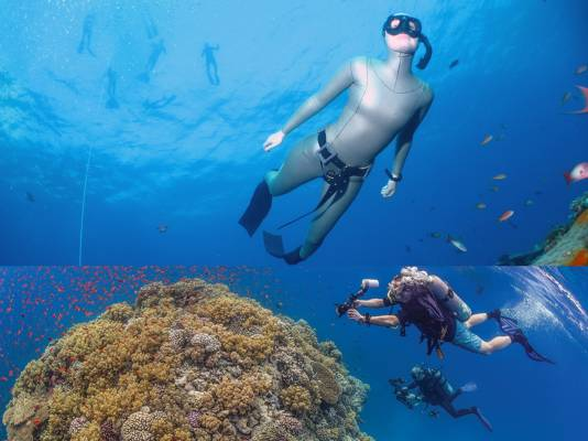 If you want to learn to scuba dive, you should learn to freedive first with Go Freediving_web