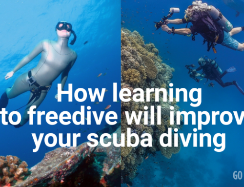 Want to learn to scuba dive? Why you should learn to freedive first.