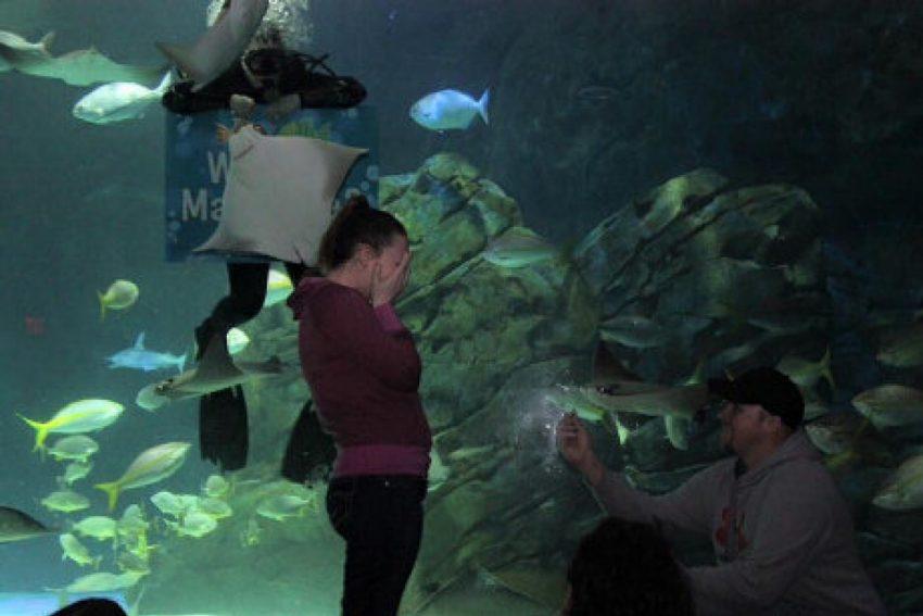 stingray underwater photobomb wedding proposal