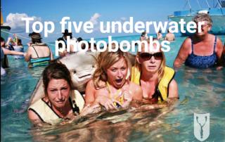 underwater photobomb top five
