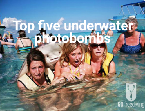 Underwater Photobombs – My Top Five!