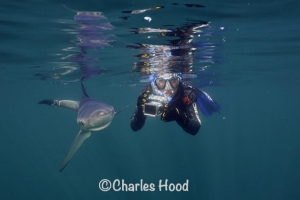 Go Freediving Holidays and Trips - diver and shark credit Charles Hood.jpg
