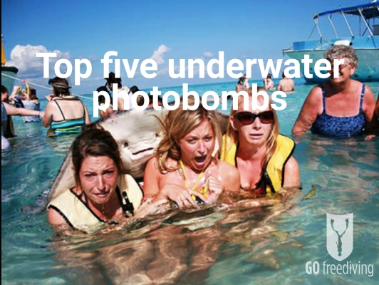 Go Freediving - top five underwater photobombs - featured image