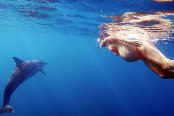 Go Freediving - Ten Things You Can Do Underwater - Dolphin Midwives