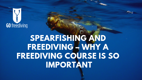 Spearfishing and Freediving – Why a Freediving Course is So Important