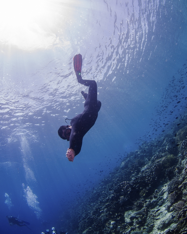 freediving holiday in Indonesia free+diver