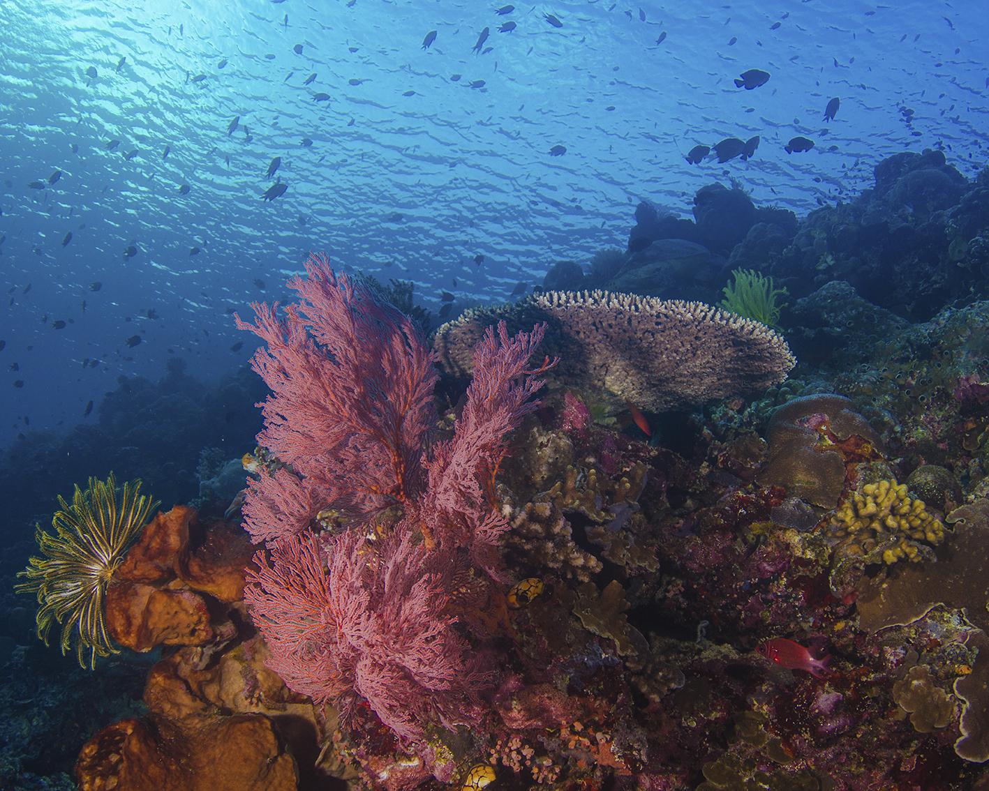 reef+top+3