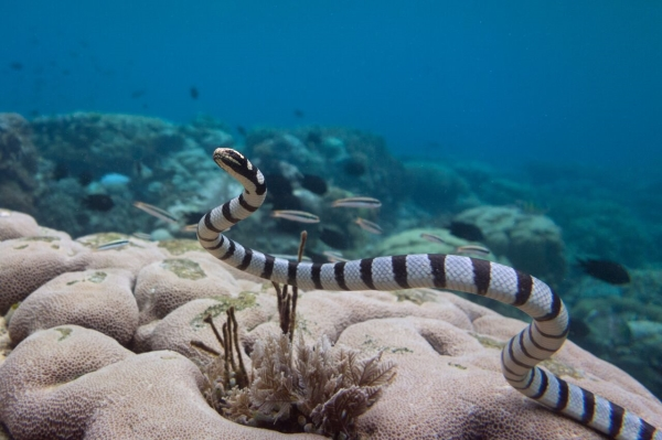 Go freediving - freediving and photography - snake