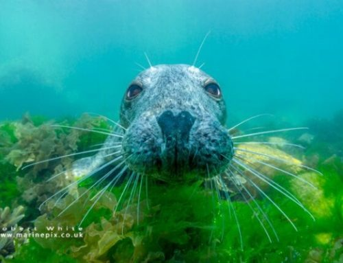 Underwater Photography and Freediving – Rob White