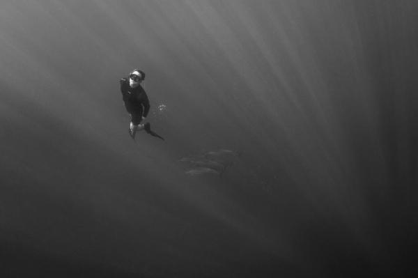 go freediving - freediving and photography - lance sagar - dolphin leaves the pod
