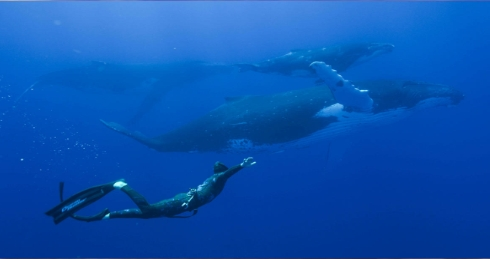 go freediving - plastic pollution and freediving in yeovil talk - diver and whale