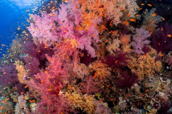 freediving photography - go freediving - roberto de silva coral1
