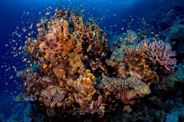 freediving photography - go freediving - roberto de silva coral2