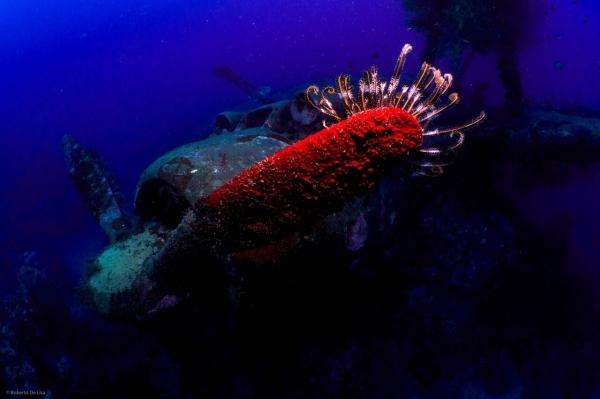 freediving photography - go freediving - roberto de silva2Seaplane