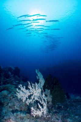 freediving photography - go freediving - roberto de silva3
