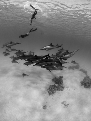 go freediving - underwater photographer danny spitz - dolphins1