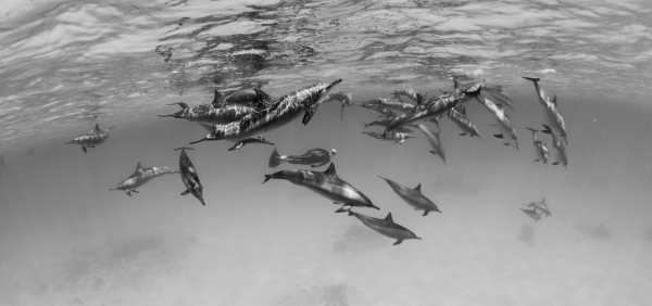 go freediving - underwater photographer danny spitz - dolphins3