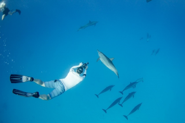 go freediving - underwater photographer danny spitz - dolphins5