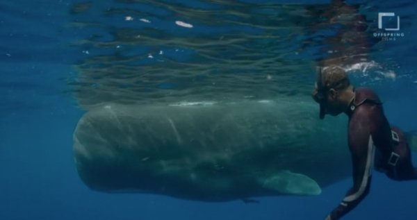 go freedving - freediving with sperm whales - patrick ayree 12