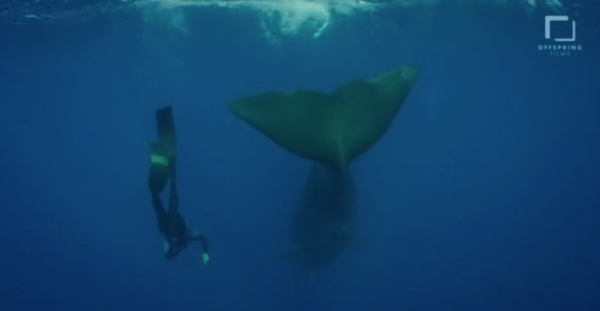 go freedving - freediving with sperm whales - patrick ayree 13