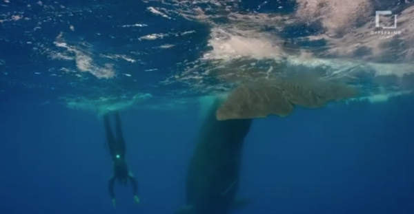 go freedving - freediving with sperm whales - patrick ayree 14