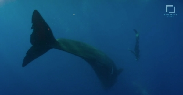 go freedving - freediving with sperm whales - patrick ayree 15